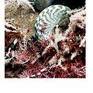untitled #144 [flat rocks] by Bronwen Hyde