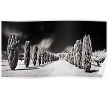 Tree line, Carrick Hill, S.A, Australia Poster