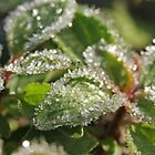 Sprinkled with Frost by Lynn Gedeon