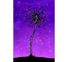 Dandelion Tree Photographic Print