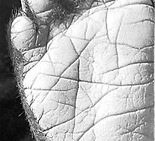 Padfoot by RLHerd