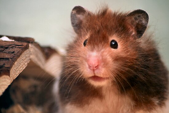 Harry the Hamster by goodie