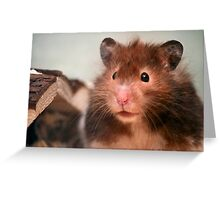 Harry the Hamster Greeting Card