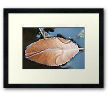 Floating leaf photography Framed Print