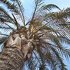 Palm by Laura Kelk
