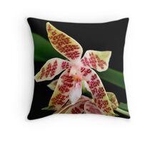 Species Orchid - Phalaenopsis lueddemanniana Throw Pillow