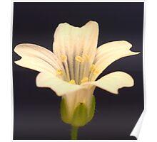 Flower_11 Poster