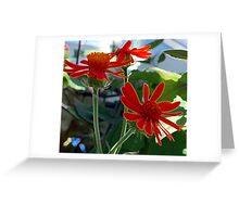 Red Gerber Dasies Greeting Card
