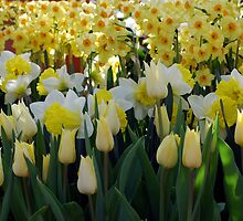 Tulips And Jonquils by Kathleen Struckle