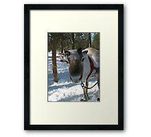 Reindeer Framed Print