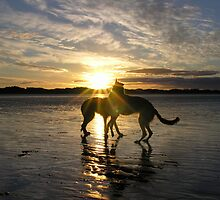 sundance by joak