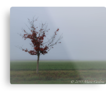 Alone In the Field Metal Print