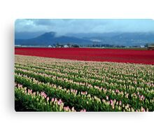 Spring Tulip in the Field Canvas Print