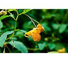 Orange Snapper!  Photographic Print
