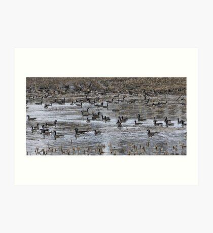 Geese Geese Geese Art Print