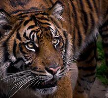 Waiting for prey by Cheri  McEachin