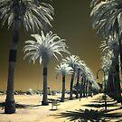 StKilda Palms by Louise Wolfers