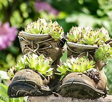 Planter Boots by EmleRosencrance