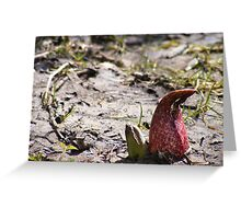 Red Skunk Greeting Card
