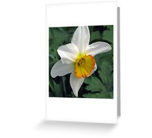 Dandy Daffodil Greeting Card