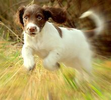 This is why they call me a springer ! by Alan Mattison