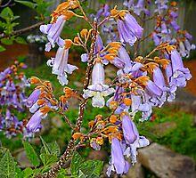 Purple Blooms by Adrena87