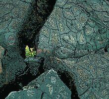 Lava Regrowth by Rob Watson