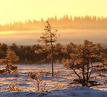 29.12.2014: Winter Morning at Torronsuo National Park by Petri Volanen