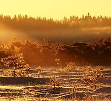 29.12.2014: Winter Morning at Torronsuo National Park II by Petri Volanen