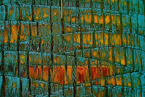 Bark Abstract by Julie Marks