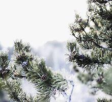 Winter Pine by Evan Adnams