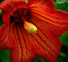 Red Trumpet by Bette Devine