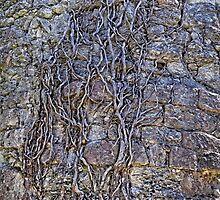 Roots and stones by numgallery