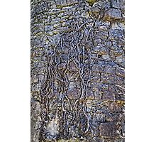 Roots and stones Photographic Print