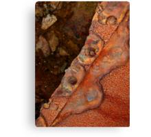 Rust 1 Canvas Print