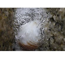 Nature's Bubbly Photographic Print