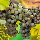 Grapes by Alison Cornford-Matheson