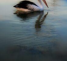 Pelican by Murray Swift