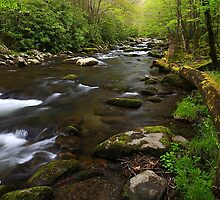 Spring on Tremont, GSMNP by ThomasRBiggs