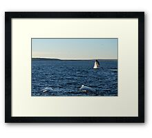 Southern Right Whales 2 Framed Print