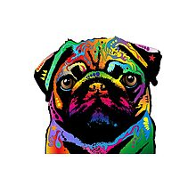 Pug Dog Photographic Print