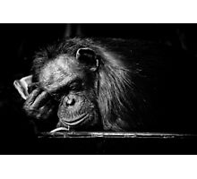 Sleeping Chimpanzee Photographic Print
