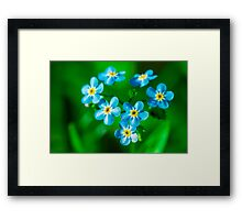 Forget-me-not flowers Framed Print