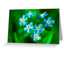 Forget-me-not flowers Greeting Card