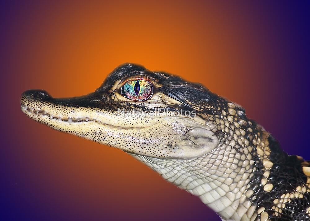 Go Gators by NaturalPhotos