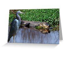 Florida Wildlife Greeting Card