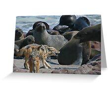 Blackbacked Jackals harassing Cape Fur Seals. Greeting Card