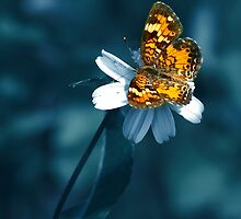 Lacewing by NaturalPhotos