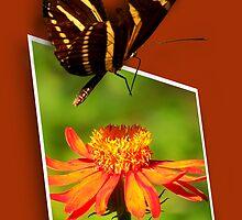 Butterfly Landing by NaturalPhotos