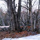 "The Last ""half-leg"" of Winter :) by TerriRiver"